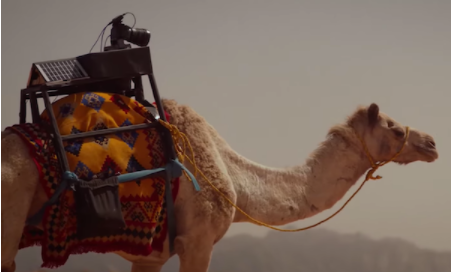 Content Creating Camel - Socially Powerful
